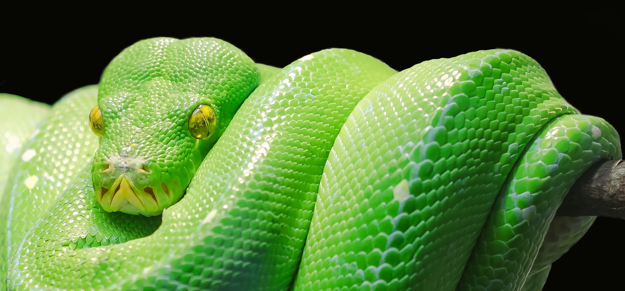 Reptile Theory and Trucking Insurance Rates